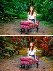 Summer_Fall-Pic